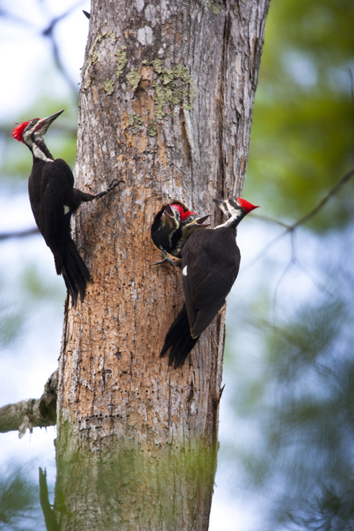 BrianHampton_Birds_NaturesBestApril2014_8096