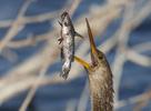 BrianHampton_Birds_NaturesBestApril2014_9376