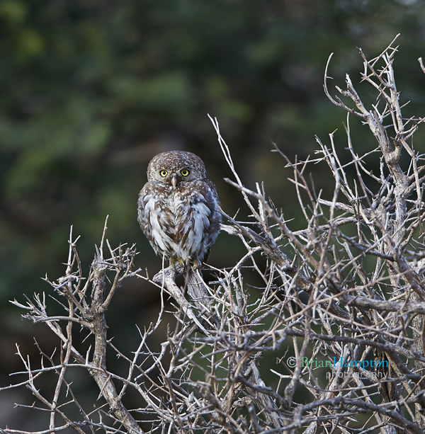 BrianHampton_Birds_NautesBestApril2014_3396