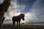 BrianHampton_Landscape_NaturesBestApril2014_0036