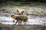 BrianHampton_Wildlife_NaturesBest2014_0455a-_1_