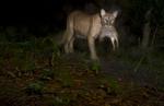 BrianHampton_Wildlife_NaturesBestApril2014_0252