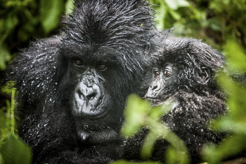 BrianHampton_Wildlife_NaturesBestApril2014_5589