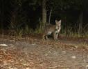 BrianHampton_Wildlife_NaturesBestApril2014_7570