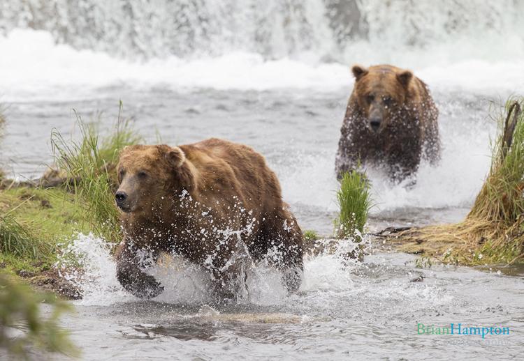 BrianHampton_Wildlife_NaturesBestApril2014_Invader_