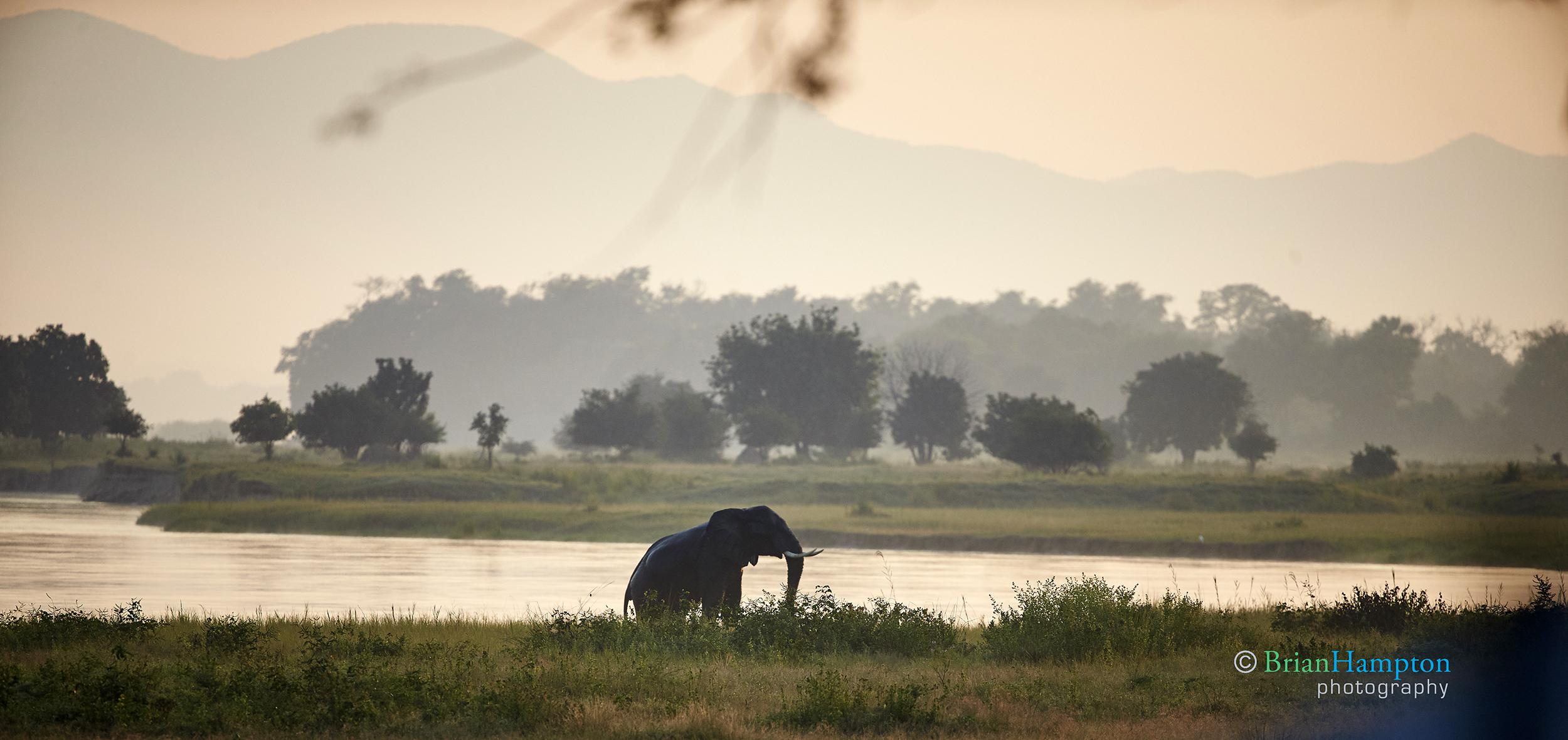 Elephant at Sunrise on the Zambeze
