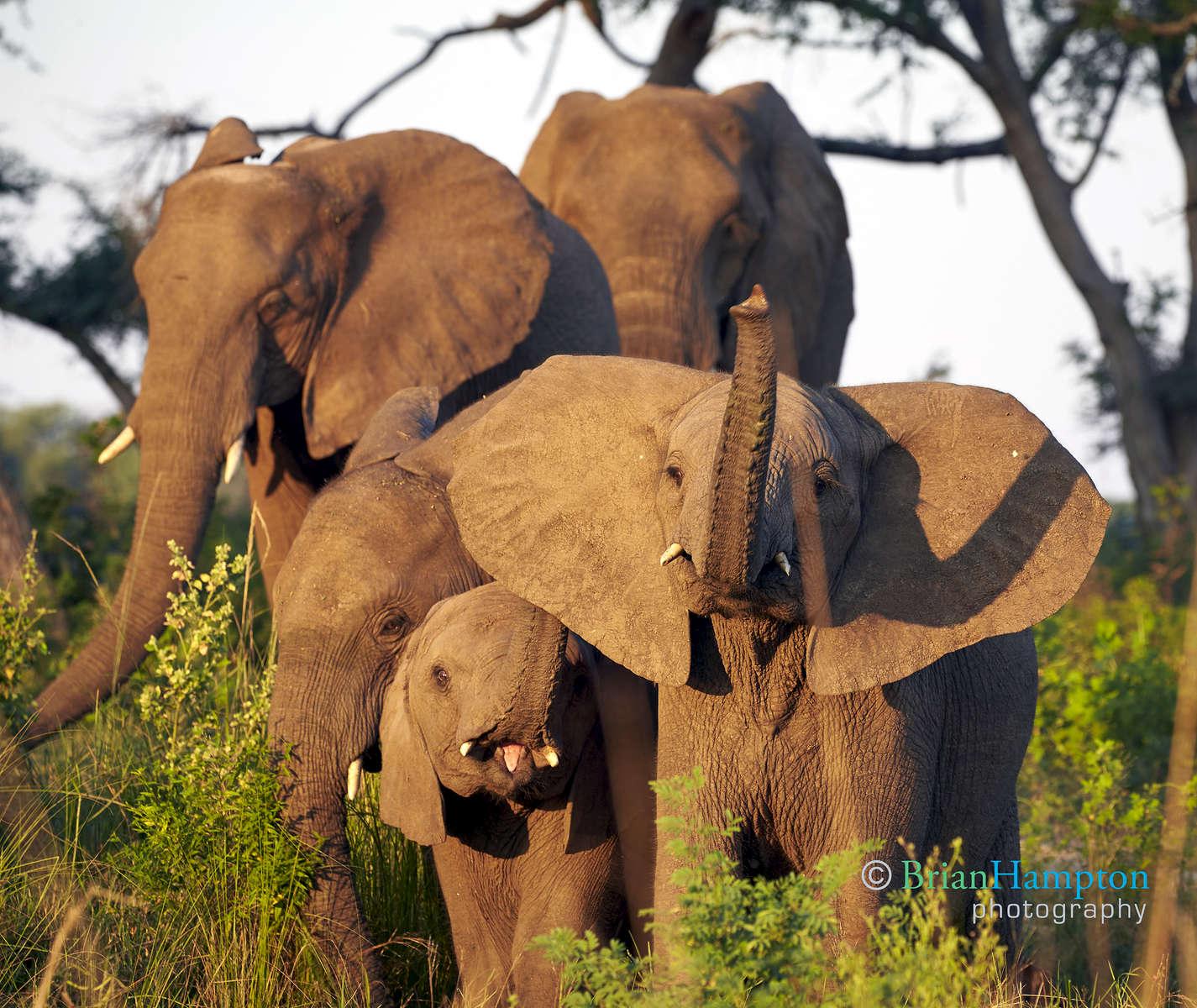 Elephants by the Zambeze