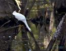 FIshing in Big Cypress