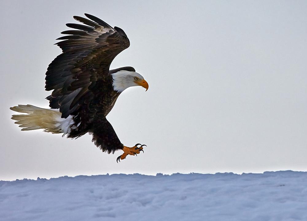 Homer Eagle Landing
