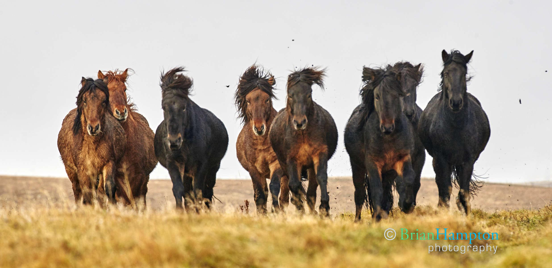 Horses_0340