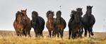 Horses_0341