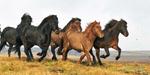 Horses_0440