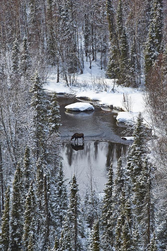Moose Creek Talkeetna