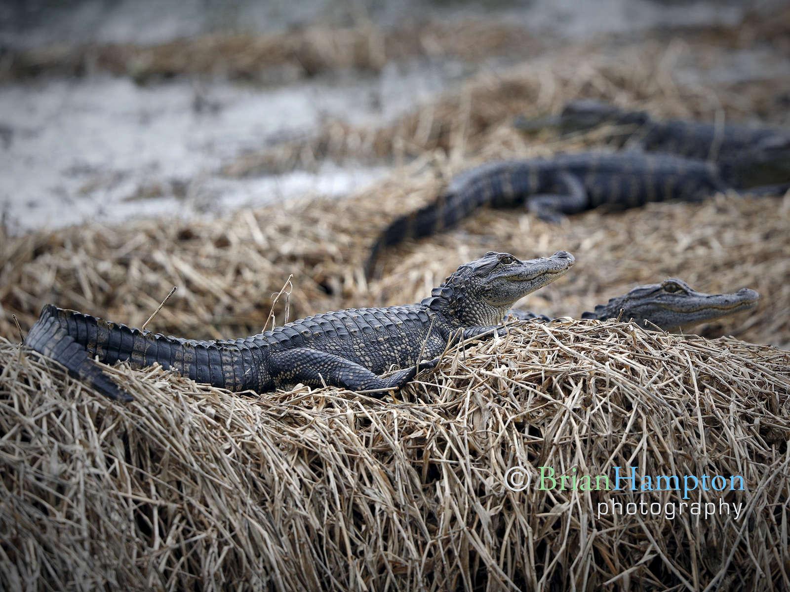 New-Gators-May2018_1677