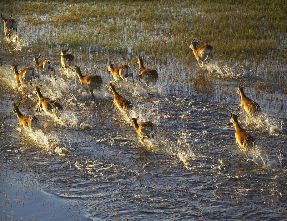 Okavango Splash