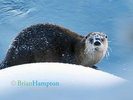 Otters Life