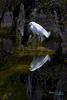 Snowy-Egret-Feb2013_5875