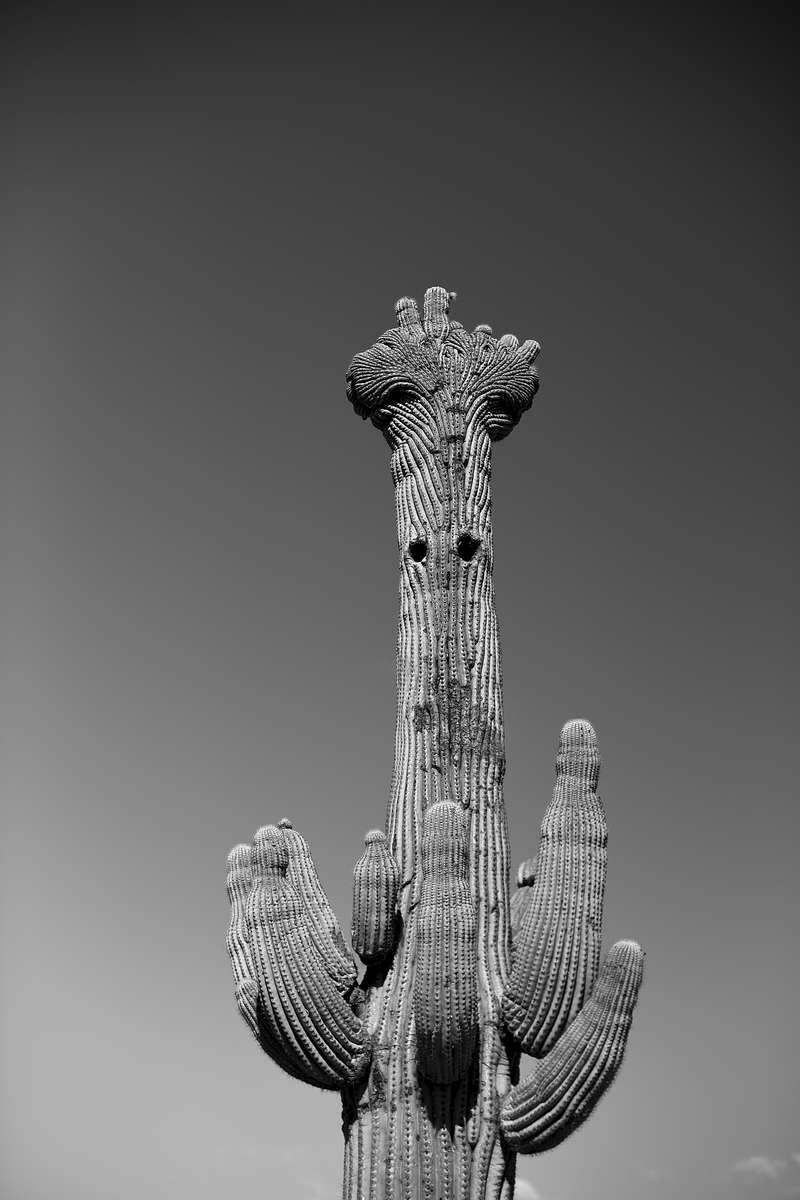 Cactus-Guy