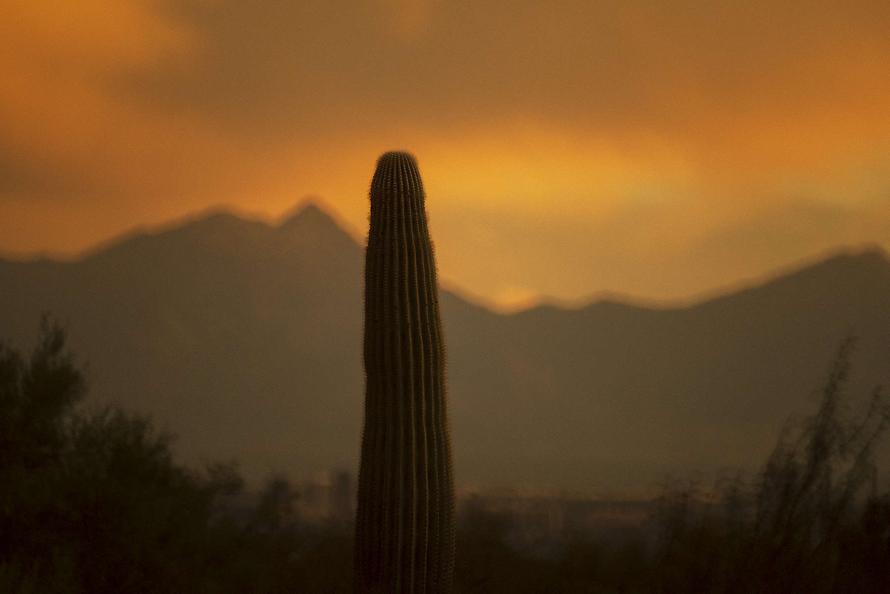 Cactus-sunset-102318-copy