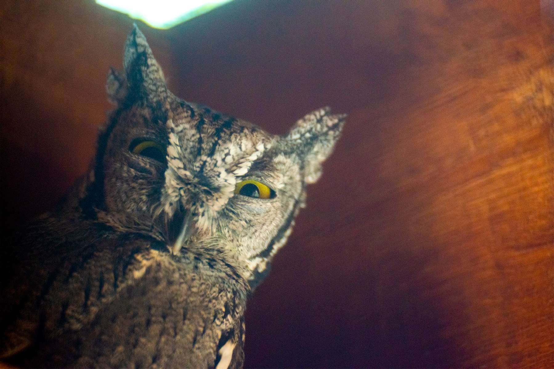 Owl-1-4x6-092620