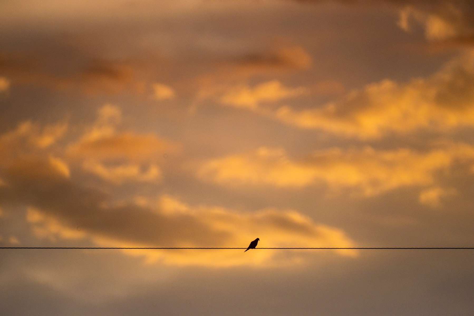 Sunset-W-Bird-7-21