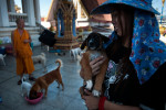A volunteer of the Dog Nation Team holds a dog in the premisses of the flooded temple in Dong Muaeng area.