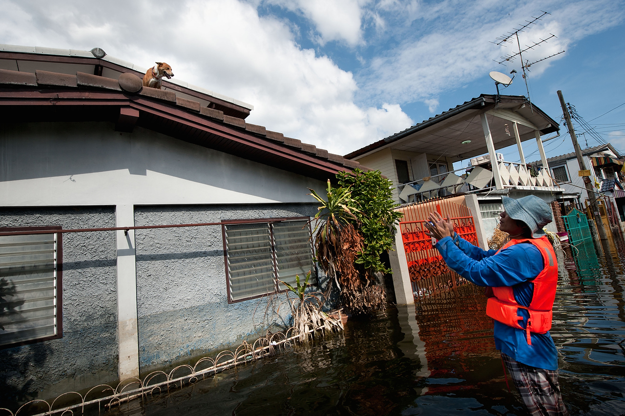 A volunteers of the Dog Nation Team tries to get to the dog on the rooftop of flooded house in Dong Muaeng area
