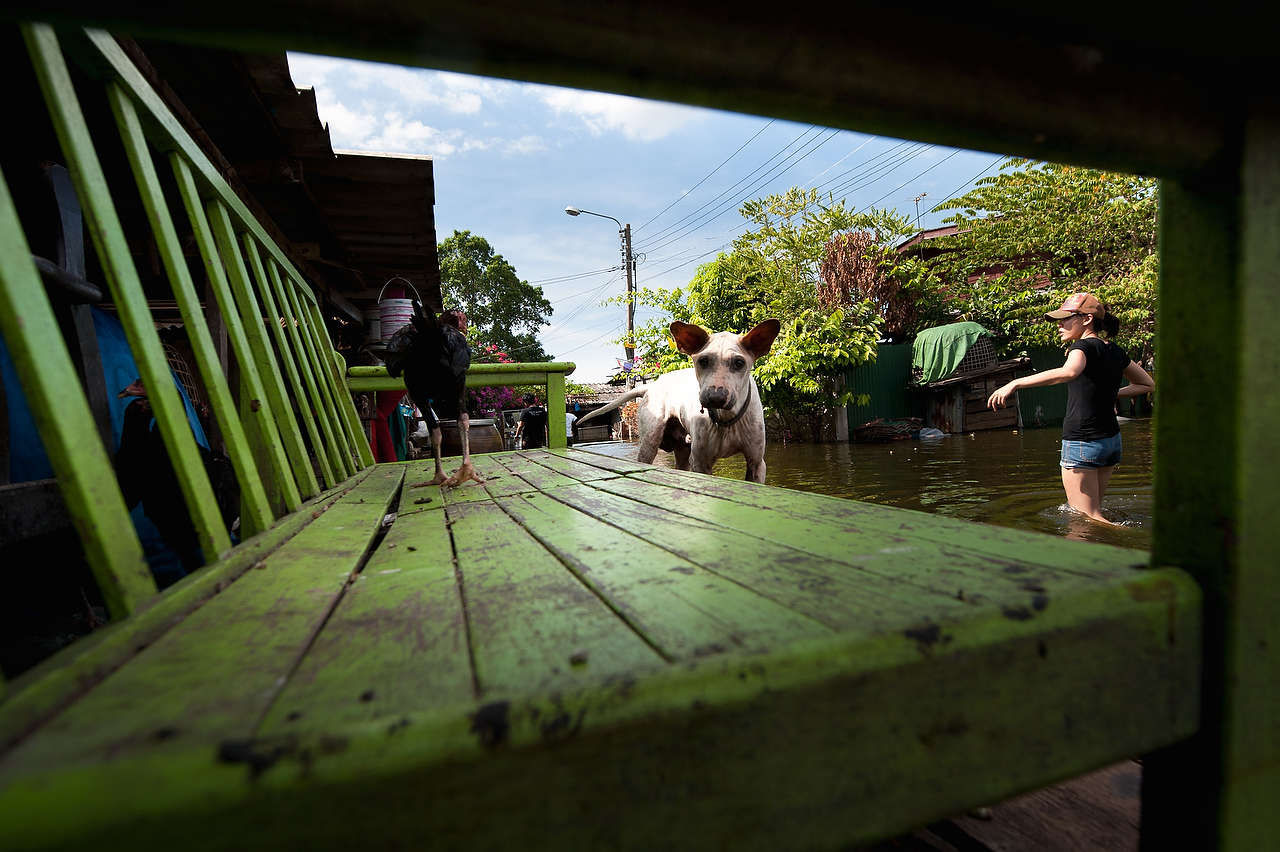 A dog stands on the makeshift floating platform in Dong Muaeng area.