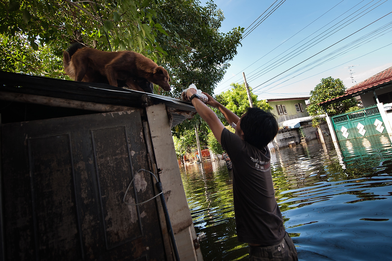 A volunteer of the Dog Nation Team feeds a street dog on the rooftop of the flooded house in Dong Muaeng area