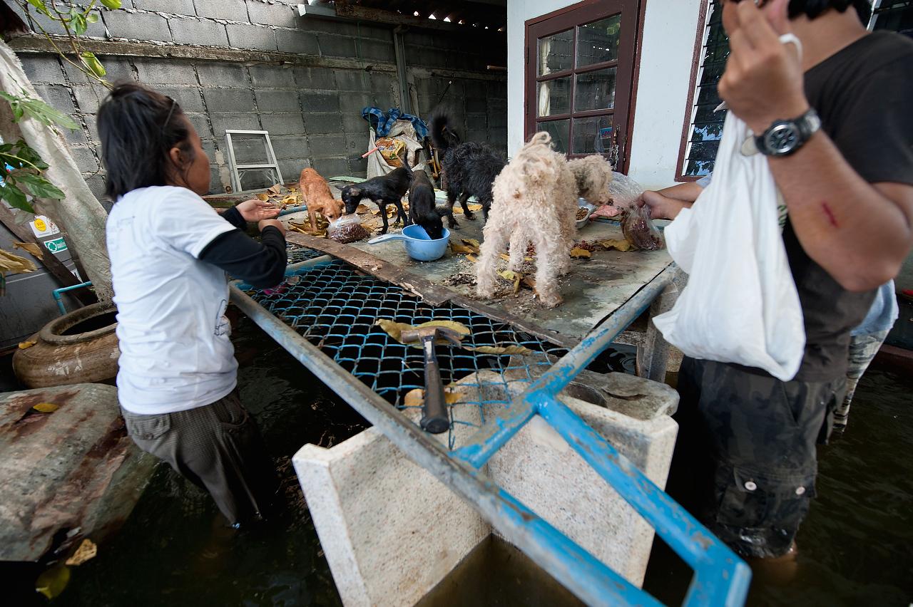 20111123_adragaj_Thai_floods_013