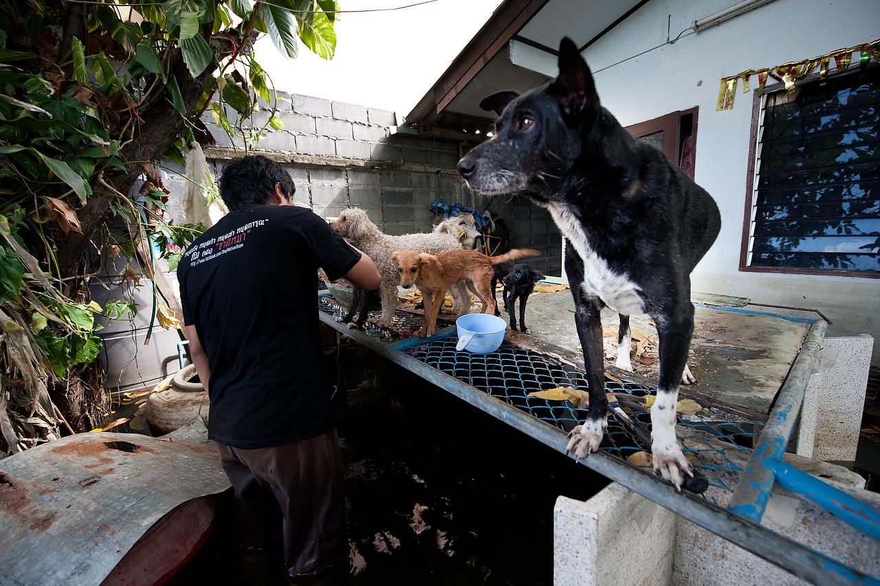 20111123_adragaj_Thai_floods_014