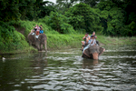 Tourists ride on the back of elephants through the guided tour through Chitwan National Park.