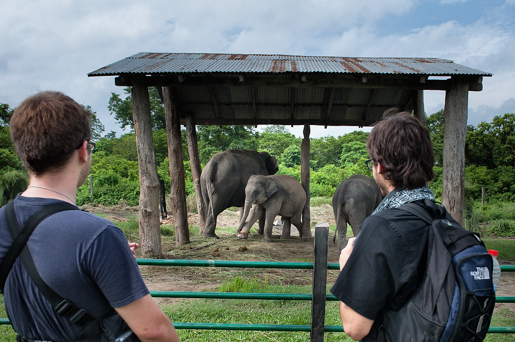 Two american tourists watch elephants at the elephant stable in Chitwan.A baby elephant born at the center nurses at first and is gradually weaned to an elephant's natural diet. At age three it is corralled for a period of seven days with other babies to wean it from dependence on it's mother. It is then introduced to its two mahouts and all three begin an arduous seven year training period.Mahouts control elephants by three methods; commands given by voice, those given using an elephant prod, a stick ending in a blunt hook, and by applying pressure with the feet and legs. The prod might be to tap parts of the animal's body to indicate the angle of work, the desired direction to move indicated with the feet, and the action begun with a voice command.