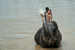 Elephant bathing with tourist in Chitwan National Park.