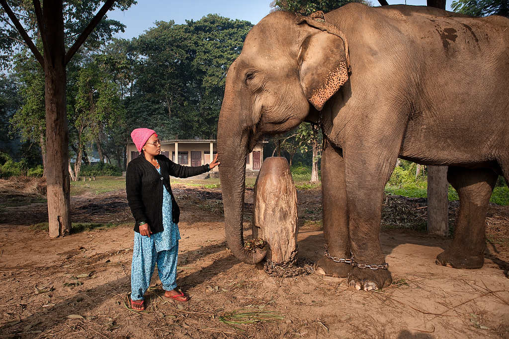 Mahout Meena Mahato with her elephant Pangoo at Hattisar Soura elephant stable.Meena Mahato (35) is the first female mahout in Nepal. She joined the stable few year ago.