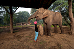 Mahout Meena Mahato feeds her elephant.