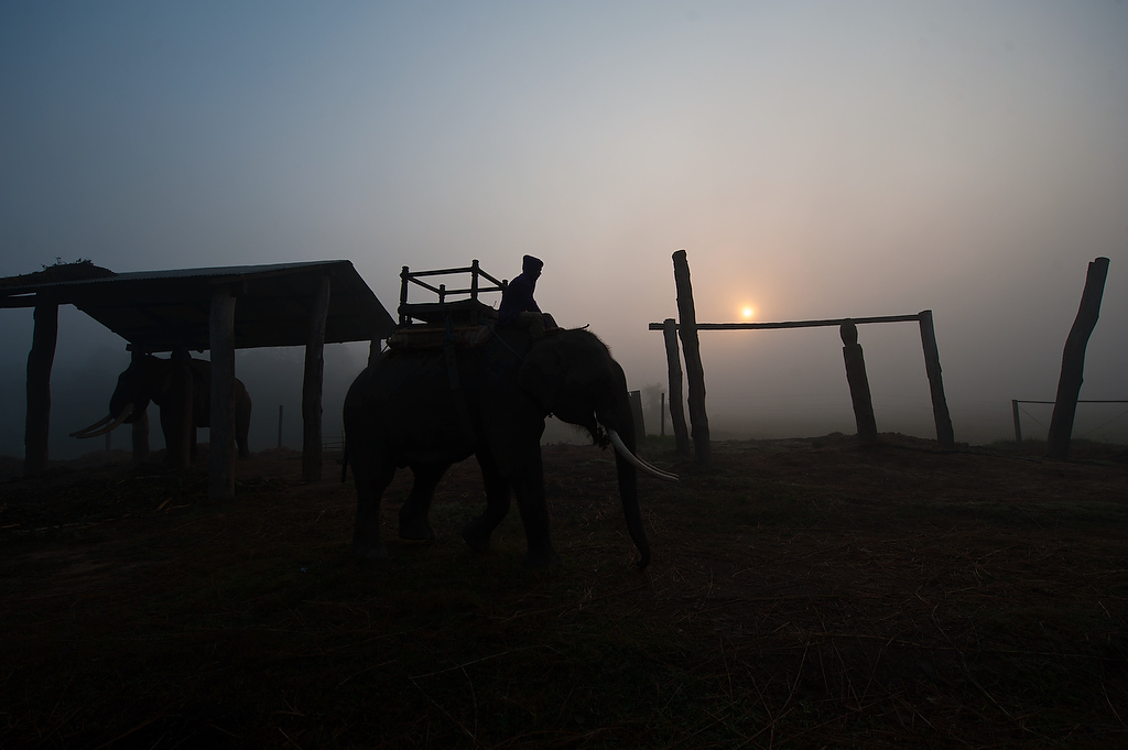 Day of the working elephants starts at 4 am