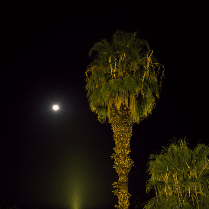 California Fan Palm and MoonPalm Springs, CA 2008