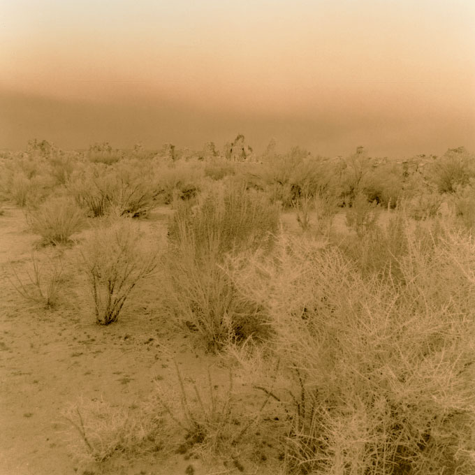 Sagebrush Scrub.1Mono Lake, Lee Vining, California 2003