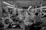 A view of Geolan Sportswear a Garment factory, 202 Centre St. New York Chinatown, 1983. Numerous people are shown working in the factory that is lit with flourescent lights.