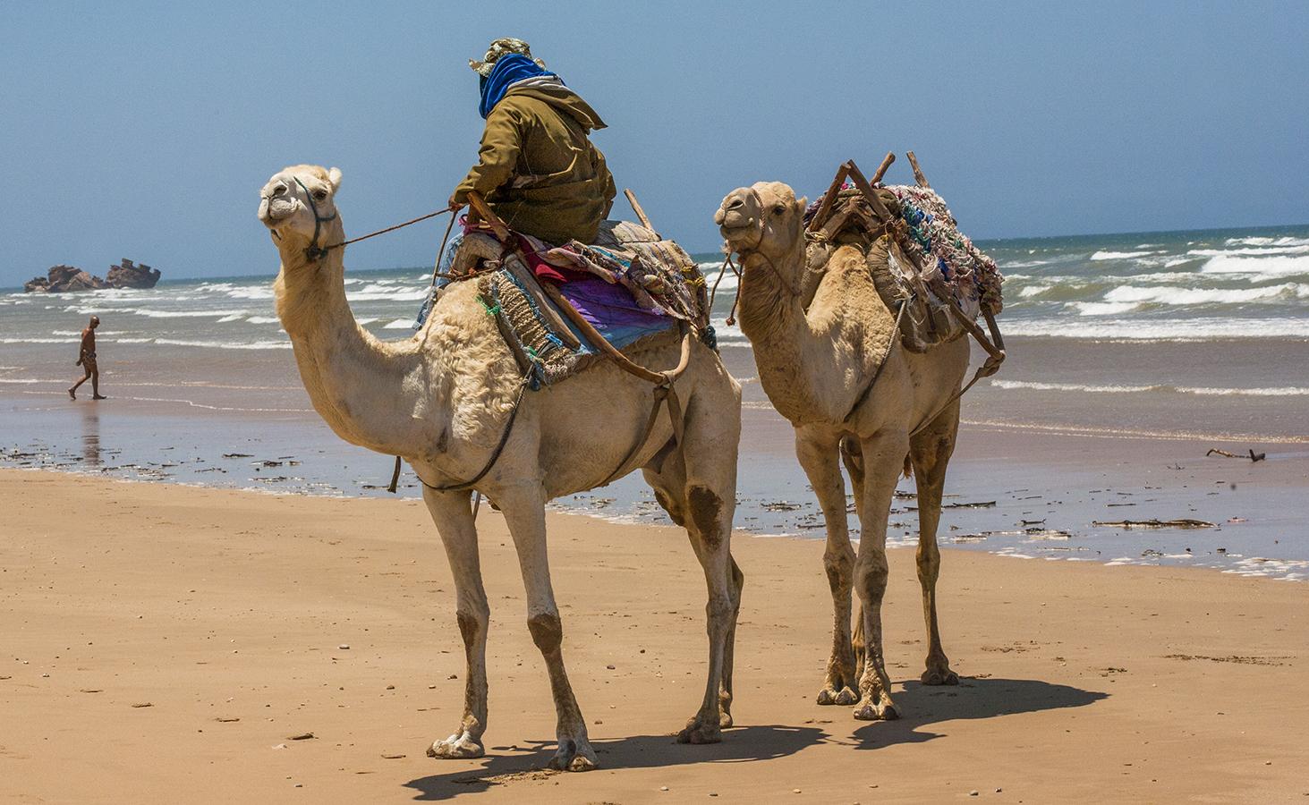 camels_beach