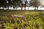 la_brosse_lawn