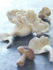 oyster_shiitake_mushrooms_0004