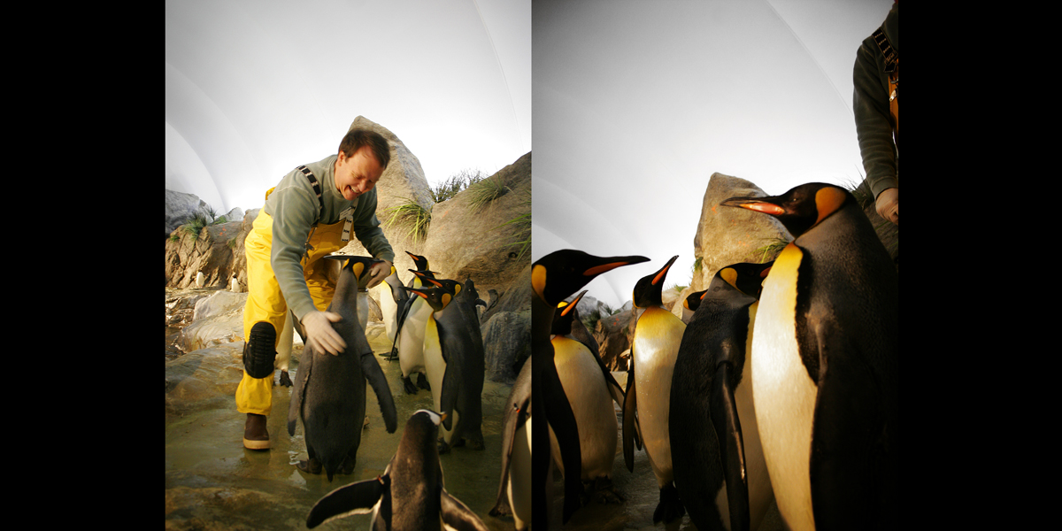 Frank Fischer is a penguin keeper.