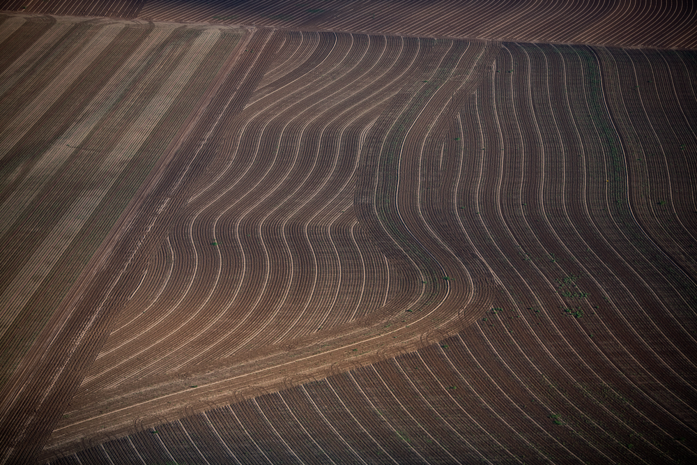 Tilling Rows, Colorado City, Texas 2007 (070701-0269)