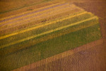 Crop Tones, Papillion, NE 2011 (110930-0062)