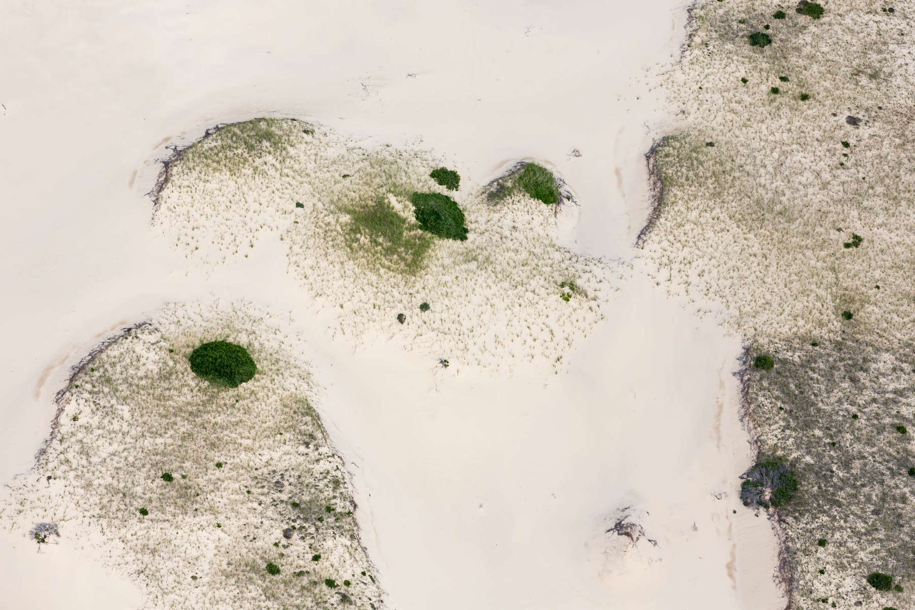 Incipient Foredunes, Cape Cod, MA 2013 (130721-0277)Dunes, beach, ocean, island, vegetation, sand, green