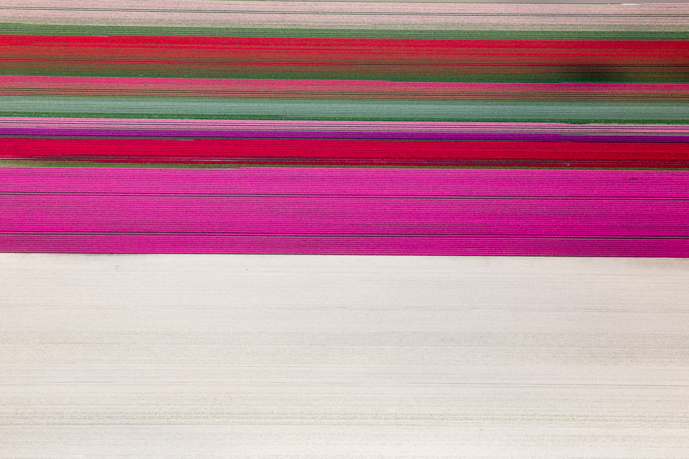 Tulip Field Sequence, Netherlands 2015 (150510-0153)