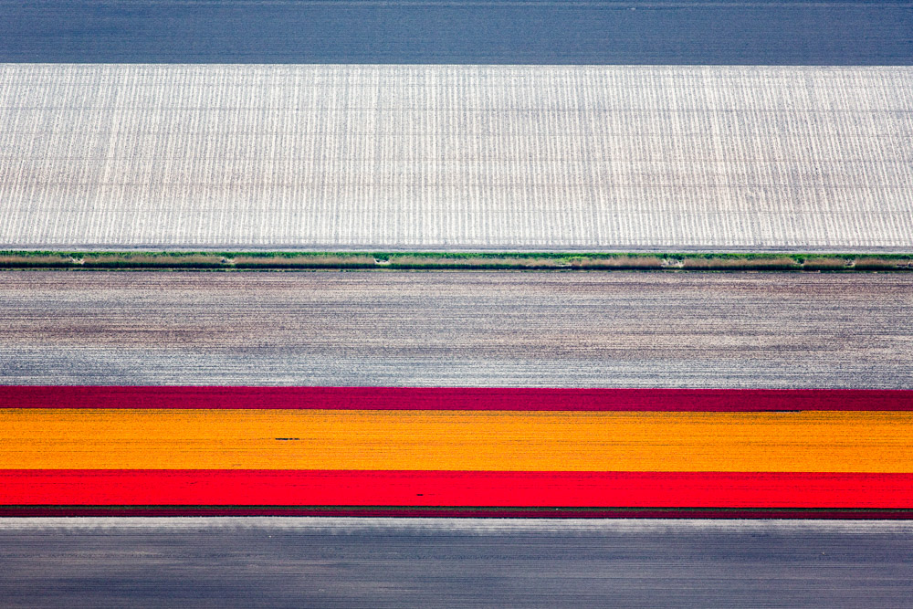 Orange Tulip Strip, Rutten, Netherlands 2015 (150502-0230)