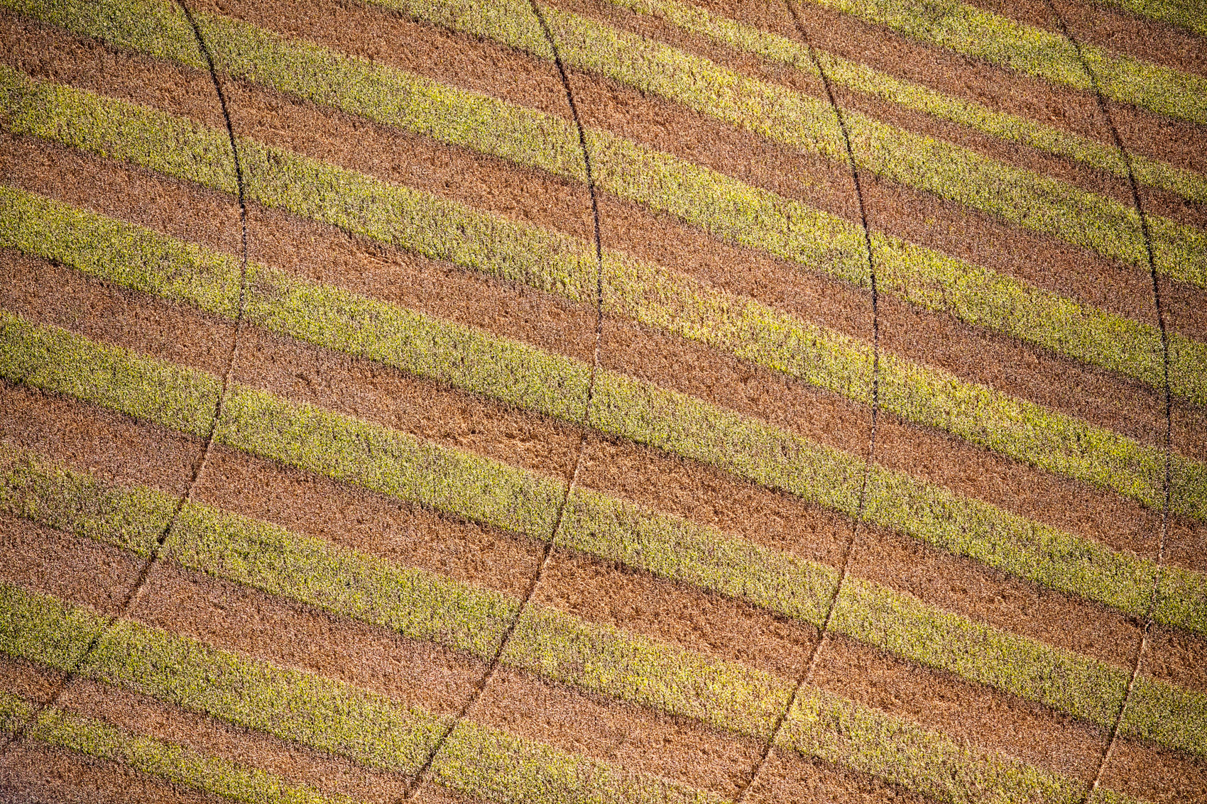 Pivot Tracks, Brownstown, IN 2016 (160911-0420)